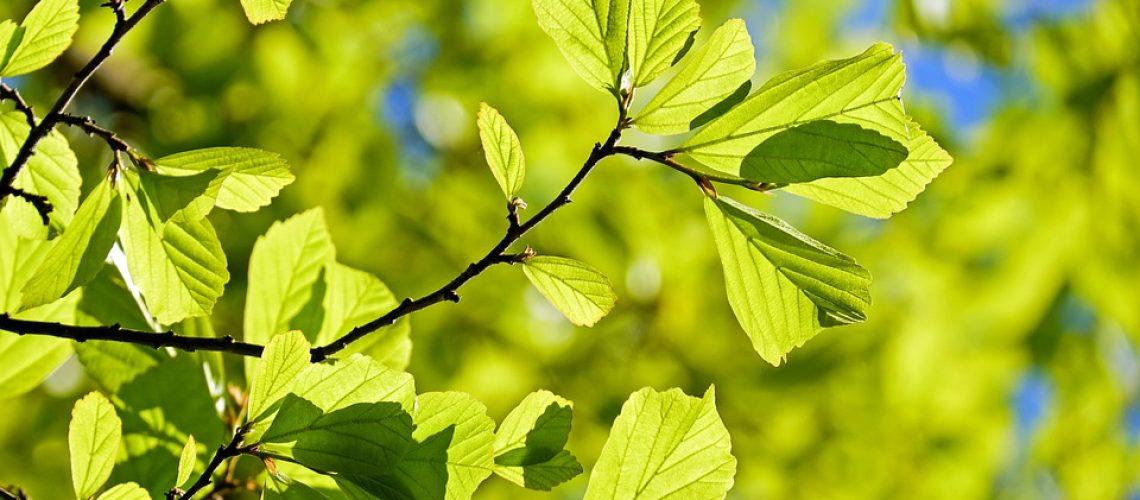 persian-oak-wood-3064187_960_720